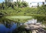 imagem de São Félix do Tocantins Tocantins n-17