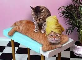 صور قطط مضحكة 2013 - اجمل و اروع صور مضحكة عن القطط 2013 images?q=tbn:ANd9GcQAO5Snpa-tUd9siLJnODlCOrmgFA9cRJu0whFUC0EJ8MtQjseB
