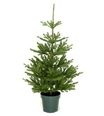 Lifelike Artificial Christmas Trees Canada by 4ft Imperial Spruce Potted Feel Real Artificial Christmas Tree