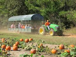 Pas Pumpkin Patch 2017 by Guide To Hay Rides In Ohio I Love Halloween