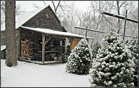 Christmas Tree Farms Near Lincoln Nebraska by Photo Gallery Walnut Grove Tree Farm