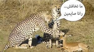 الصيام ههههه images?q=tbn:ANd9GcQ