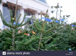 Driftwood Christmas Trees For Sale by Christmas Tree Sale Uk Christmas Lights Decoration