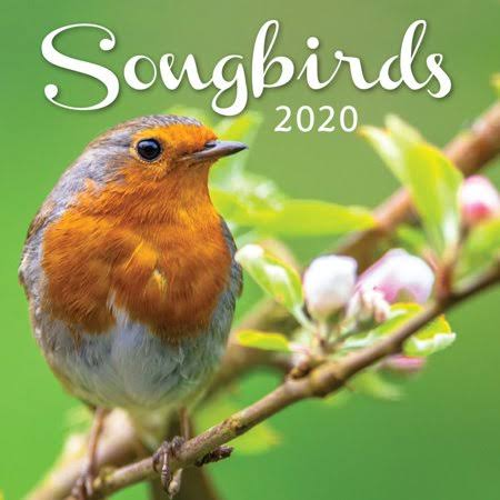 Turner Licensing Songbirds 2020 Mini Wall Calendar