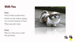 Tiny Non Shedding Dog Breeds by Smalldogsusa Discover The Secret Lives Of Small Dogs