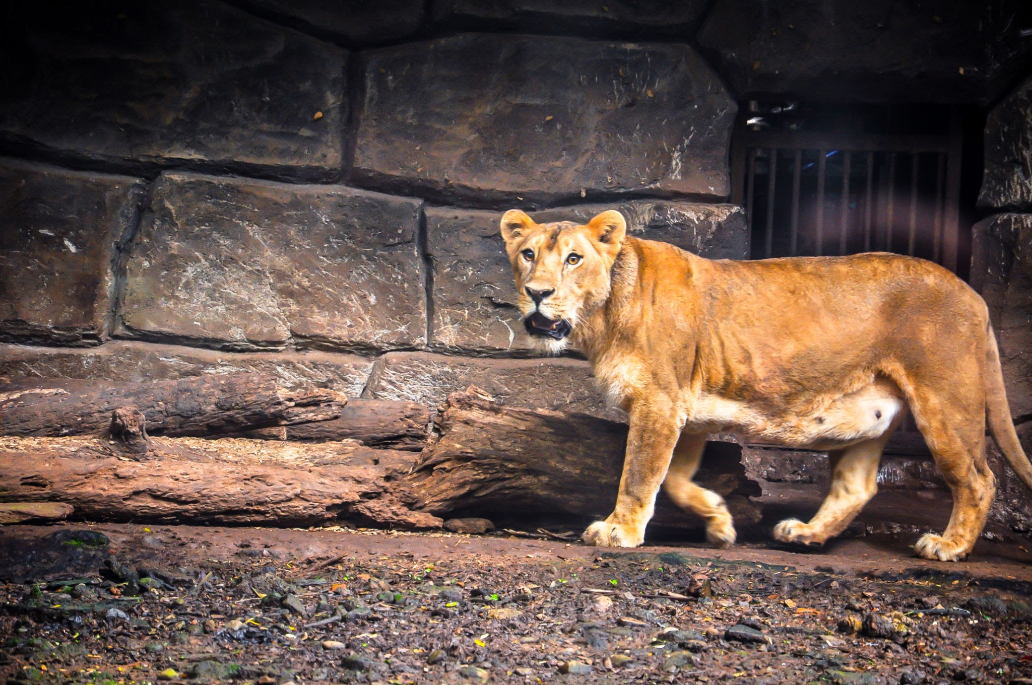 Bandung Zoological Garden