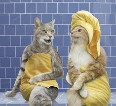 صور قطط مضحكة 2013 - اجمل و اروع صور مضحكة عن القطط 2013 images?q=tbn:ANd9GcQYw3YGSWAhUCbvAMS8EB7RgDhPE_KZAXAVovbEPrGhhDL8A7Oy