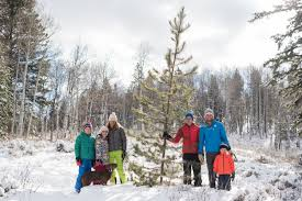 Kinds Of Christmas Trees by A Holiday Tradition That Helps Forests Thrive Outpost Jackson Hole