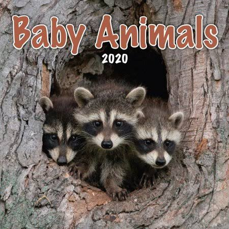 Turner Licensing Calendars Baby Animals Mini Wall Calendar FSC Certified Paper and Full Color Pages - All Major Holidays
