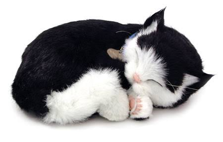 Perfect Petzzz Kitten Plush Toy - Black and White, Short Hair