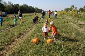 Southwest Ohio Pumpkin Patches by 11 Awesome Pumpkin Patches In Louisiana