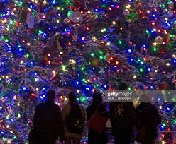 Balsam Christmas Tree Australia by Pelosi Presides Over Capitol Christmas Tree Lighting Ceremony
