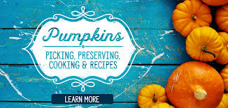 Trinity Pumpkin Patch Baton Rouge by Discount Grocery Save A Lot