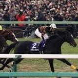ホープフルステークス, 競馬の競走格付け, 予想, 有馬記念, 日本中央競馬会, 競走馬の血統