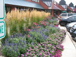Flowers For Flower Beds by Prairie Star Flowers Blog Prairie Star Flowers Blog