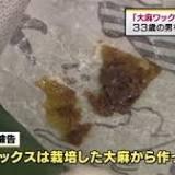 麻薬取締部, 麻薬取締官, 所持, 大麻取締法, 神奈川県