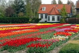 Flowers For Flower Beds by Flower Garden Pictures Alices And Gallery Also Home Gardens Images