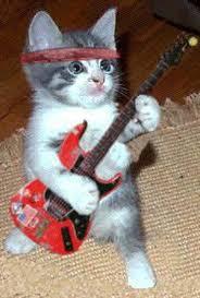 صور قطط مضحكة 2013 - اجمل و اروع صور مضحكة عن القطط 2013 images?q=tbn:ANd9GcR4JQGBZwyqKfbSX5WASUD4Y4o5BilNJ0SYRClW1AqUuUVKpoKF