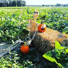 Best Pumpkin Patch Richmond Va by Hanover Vegetable Farm The Market Pumpkin Picking Mulch