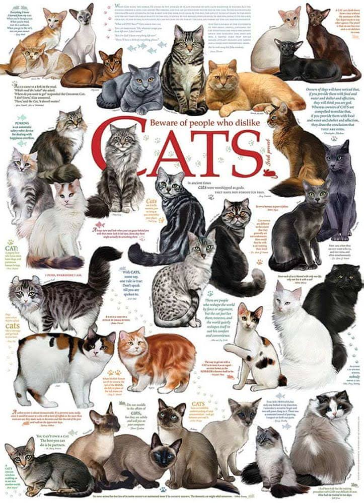 Cobble Hill: Cat Quotes 1000 Piece Jigsaw Puzzle
