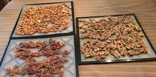 Soaking Pumpkin Seeds In Saltwater by Oh Nuts Reasons For Soaking Nuts Debbie Fox Gut Ology