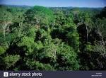 imagem de Alta Floresta Mato Grosso n-9