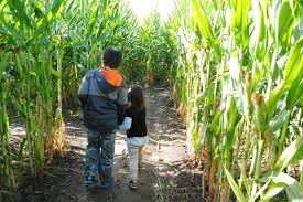 Pumpkin Patch North Bend Oregon by Fall Family Must Dos In Southern Oregon Travel Oregon