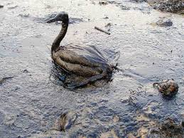 """Résultat de recherche d'images pour """"le petrole"""""""