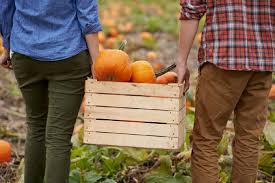 White Oak Pumpkin Patch by U Pick Pumpkin Patch At Pin Oak Farms In New Haven Mo