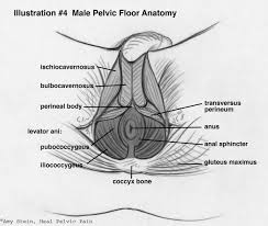 Pelvic Floor Spasms After Childbirth by About Pelvic Pt Proaxis Therapy Pelvic Pt