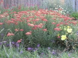 Flowers For Flower Beds by Judy U0027s Garden In Oklahoma Fine Gardening
