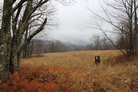 Pea Ridge Christmas Tree Farm by November 2016 Upstate Dispatch