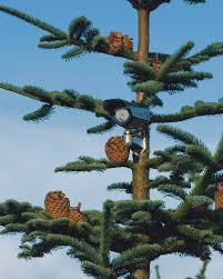 Christmas Tree Has Aphids by Christmas Is Big Business For Tree Grower Insights Fg Insight