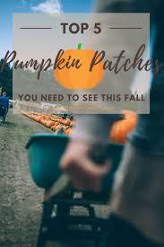 White Oak Pumpkin Patch by Best 25 Spooner Farms Ideas On Pinterest Corn Maze Harvest