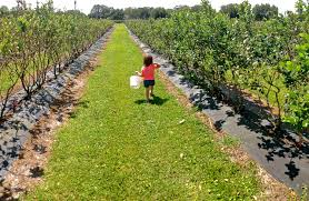 Pumpkin Patch Bonita Springs Fl by 12 Places In Florida Where You Can Pick Your Own Tasty Food
