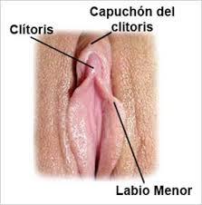 clítoris