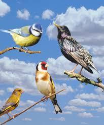 لماذا تغرد الطيور عند الفجر