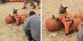 Southwest Ohio Pumpkin Patches by Dog Masters The Pumpkin Patch Photo Shoot
