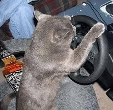 صور قطط مضحكة 2013 - اجمل و اروع صور مضحكة عن القطط 2013 images?q=tbn:ANd9GcRngkn68Vgj1Gljsi3w70Cs0efyVF2kjBVt7QpryZe7U0A1CiTXIw