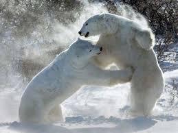 حيوانات روعة images?q=tbn:ANd9GcR
