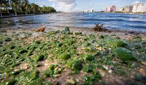 Bathtub Beach Stuart Fl Directions by Update Riviera U0027s City Beach Peanut Island Closed To Swimming