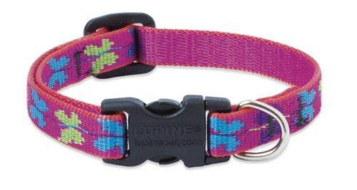 Lupine Wing It Adjustable Small Dog Collar - 1/2""