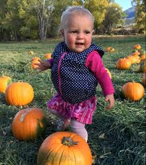 Free Pumpkin Patches In Colorado Springs by Pumpkin Patch Arkmagazine Net