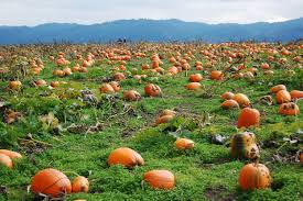 Pumpkin Patch Petting Zoo Dfw by The 12 Most Charming Pumpkin Patches In Oregon For 2017
