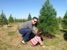 Christmas Tree Has Aphids by Choose And Cut Your Own Christmas Tree Farms In San Antonio And