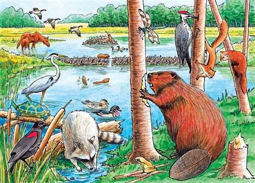 Outset Media Games the Beaver Pond Tray Puzzle - 35pcs