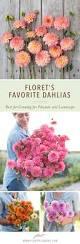Flowers For Flower Beds by Best 25 Flowers Garden Ideas Only On Pinterest Leaves Purple