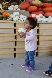 Pumpkin Patch Petting Zoo Dfw by In Dfw Pumpkin Patch Guide 2016