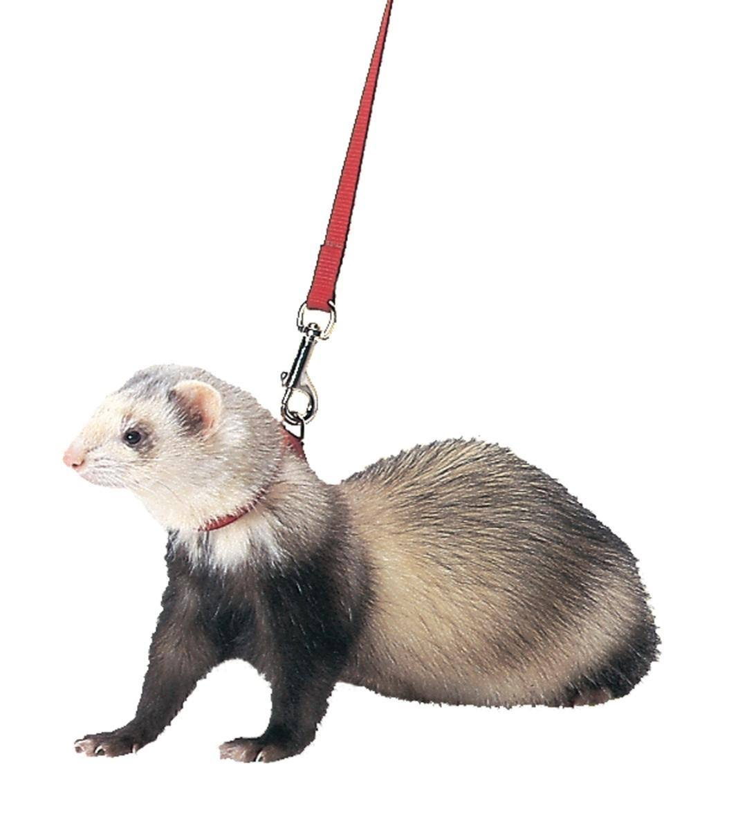 Marshall Ferret Harness Lead and Red