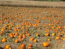 Pas Pumpkin Patch 2017 by Strasburg Railroad Scenic Train Rides In Pa Dutch Country